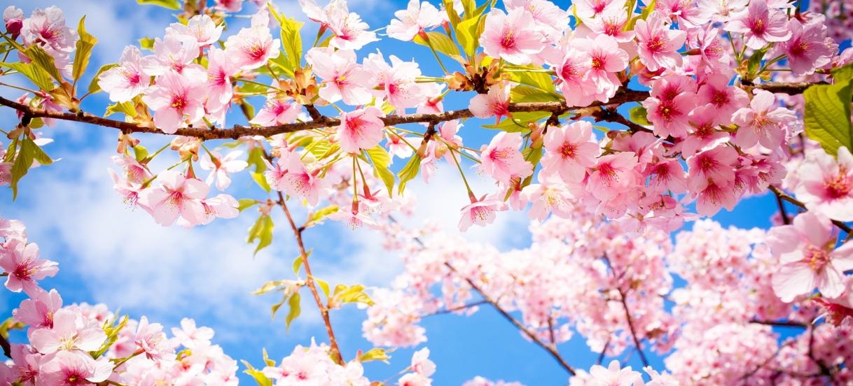 Spring EquinoxMeditation Questions
